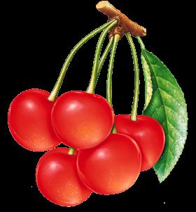 Cherries PNG