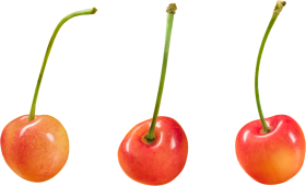 Cherries PNG