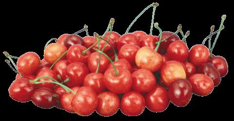 Cherrys PNG