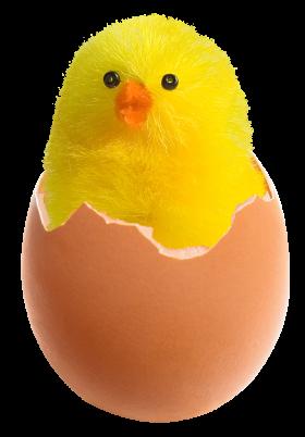 Chicken in Broken Egg PNG