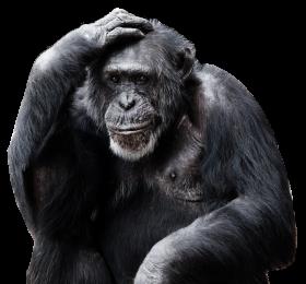 Chimpanzee PNG