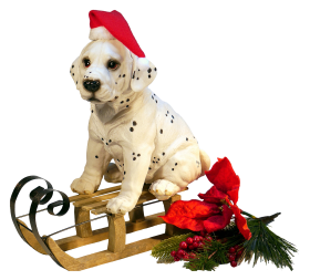 Christmas Dog PNG