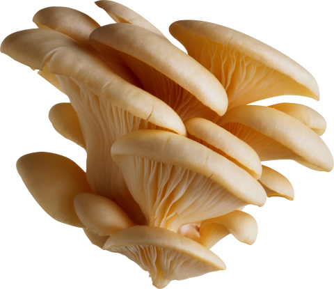 Clean Tree Mushrooms PNG