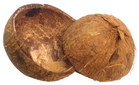 Coconut Shell PNG