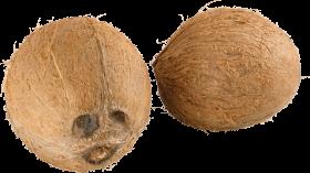 Coconuts PNG