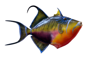 Colorful Fish PNG
