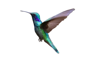 Colorful Hummingbird Flying PNG