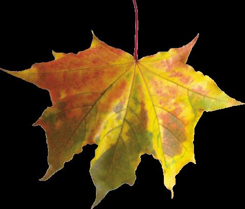 Colorful Leaf PNG