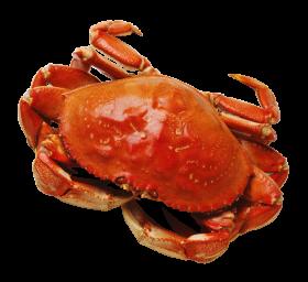 Crab PNG