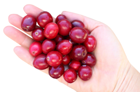 Cranberry in hand PNG