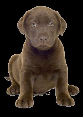 Cute Dog Whelp PNG