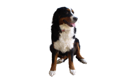 Cute Dog PNG