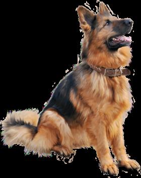 Cutest Dog sitting PNG