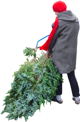 Cuts Tree PNG