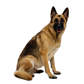 Dog Png PNG