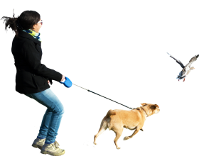 Dog Running At Birds PNG