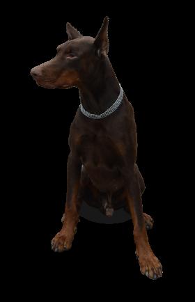 Dog Sitting PNG