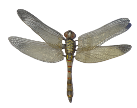 Dragonfly PNG
