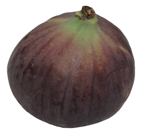 Fig PNG