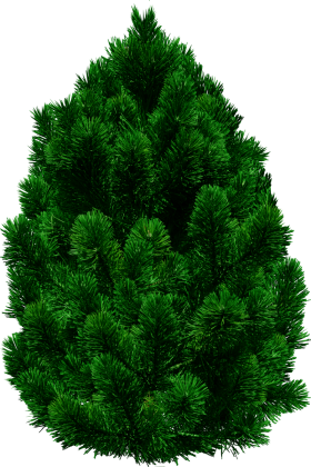 Pine trees PNG