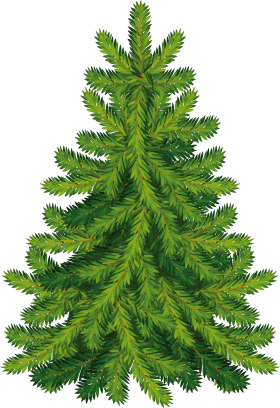 Fir Tree PNG