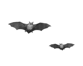Flying Bats PNG