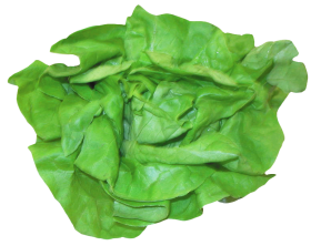 Fresh Lettuce PNG