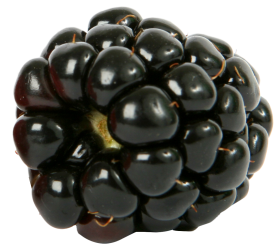 Fresh single Blackberry Fruit PNG