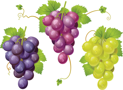 Grapes variations PNG