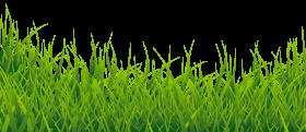 Grass Vector PNG