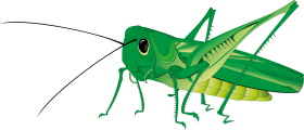 Grasshopper PNG