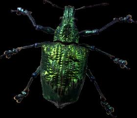 Green Bug PNG
