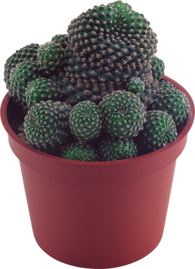 Green Cactus PNG