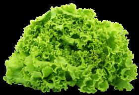 Green Lettuce PNG