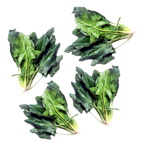 Green Spinach PNG