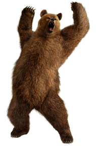 Grizzly Bear Standing PNG