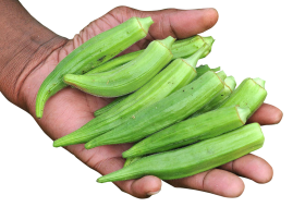 Hand with Okra PNG