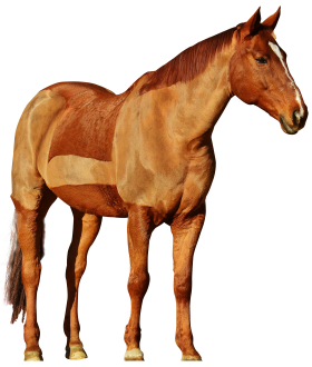 Horse Ride PNG