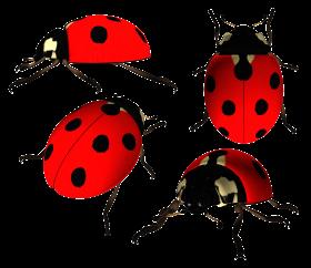 Ladybug PNG