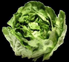 Lettuce PNG