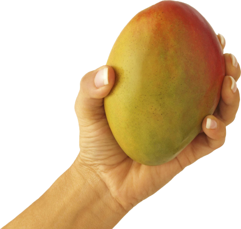 Mango with Hand PNG