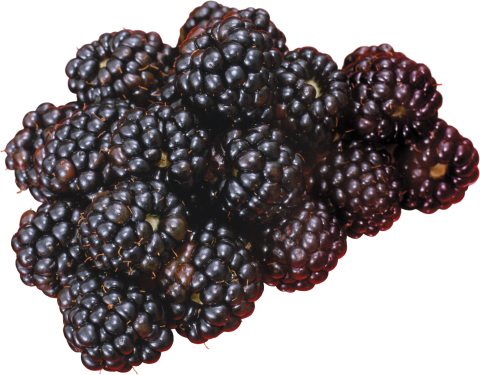 Many Blackberry PNG