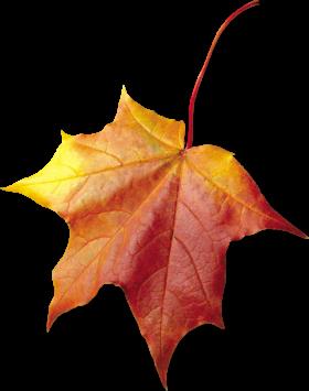 Maple Autumn Leaf PNG