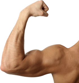 Muscle PNG