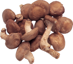 Mushroom PNG