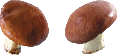 Mushrooms PNG