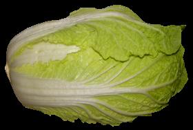 Napa Cabbage PNG