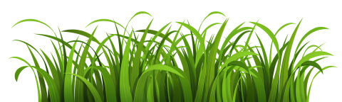 Nature Clipart PNG