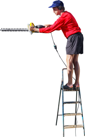 On A Ladder Cutting The Hedge PNG
