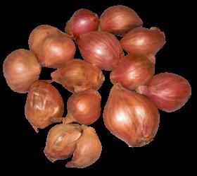 Onion Shallots PNG